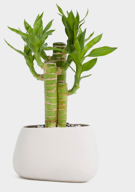Outdoor Plant Pots