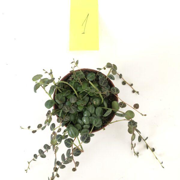 Indoor plant online shop